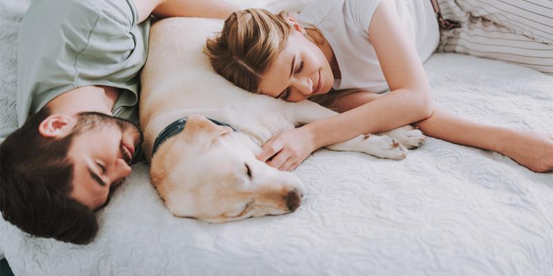 Hund und Katze im Bett | Wissenswertes | Schlafen | Magazin ...